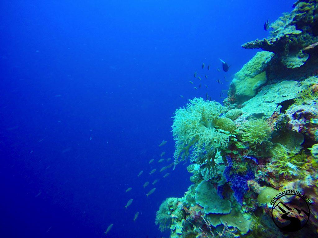 Palau SCUBA Diving Guide 2 1024x768 Palau SCUBA Diving Guide