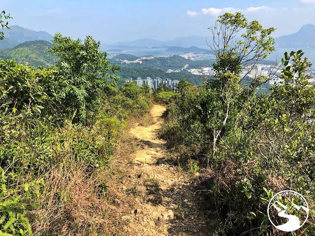 a dirt trail