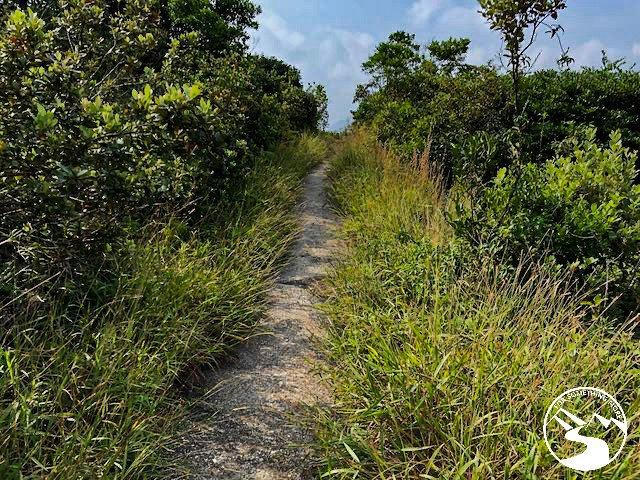 an overgrown trail