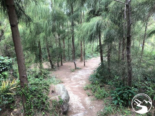 pine trees on Tung Lung Chau