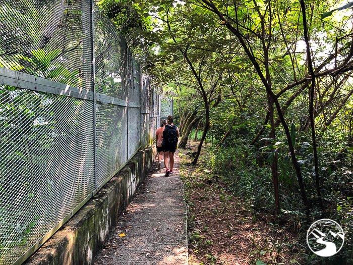women following a forest path