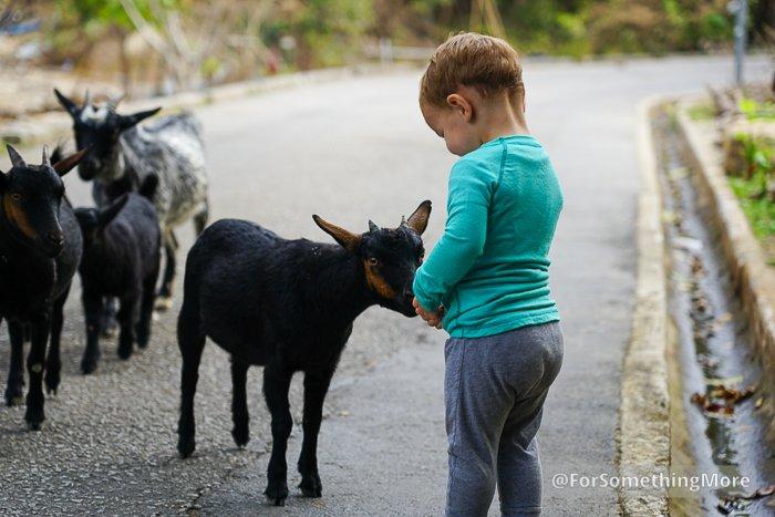 boy playing with goats on S Kwun Wat Tsuen Road