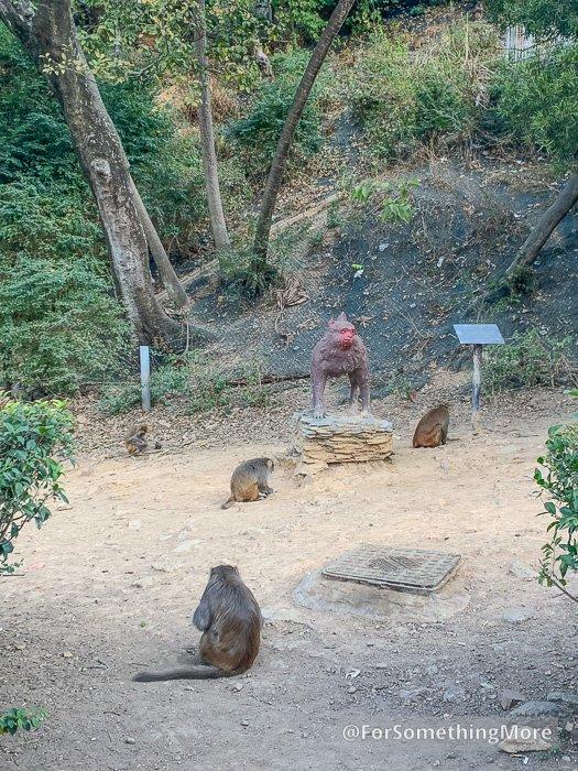 monkeys on the Eagle's Nest Nature Trail (鷹巢山)