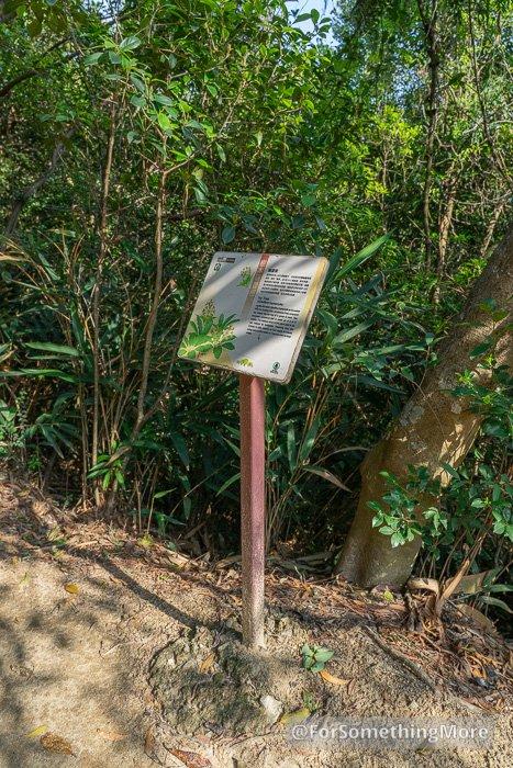 tree sign on the Quarry Bay Tree Walk (鰂魚涌樹木研習徑)