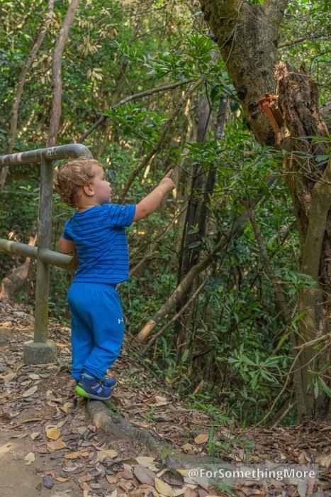 Toddler using Merrell Bare Steps Ridge Jr shoes on an easy hiking trail